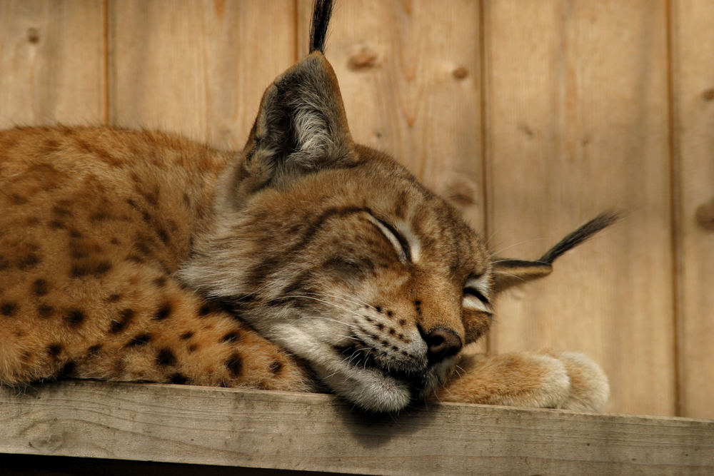 Schönheitsschlaf