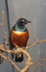 Vögel, sonstige