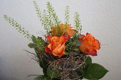 Schönste Rosen der Welt
