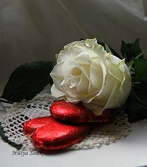 Schokolade und Rose
