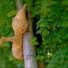 °°° Schon den ganzen Sommer sind die in den Bäumen rumgekrochen °°°