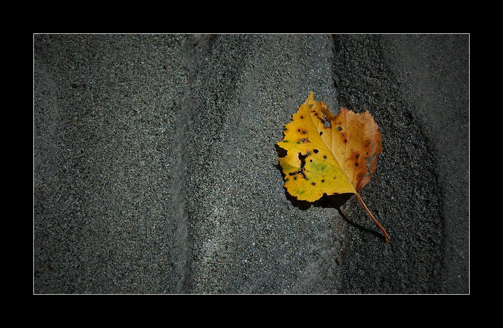 Schon Herbst?