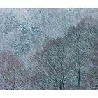 ...schon mal ein Schneegestöber fotografiert... ? :-))