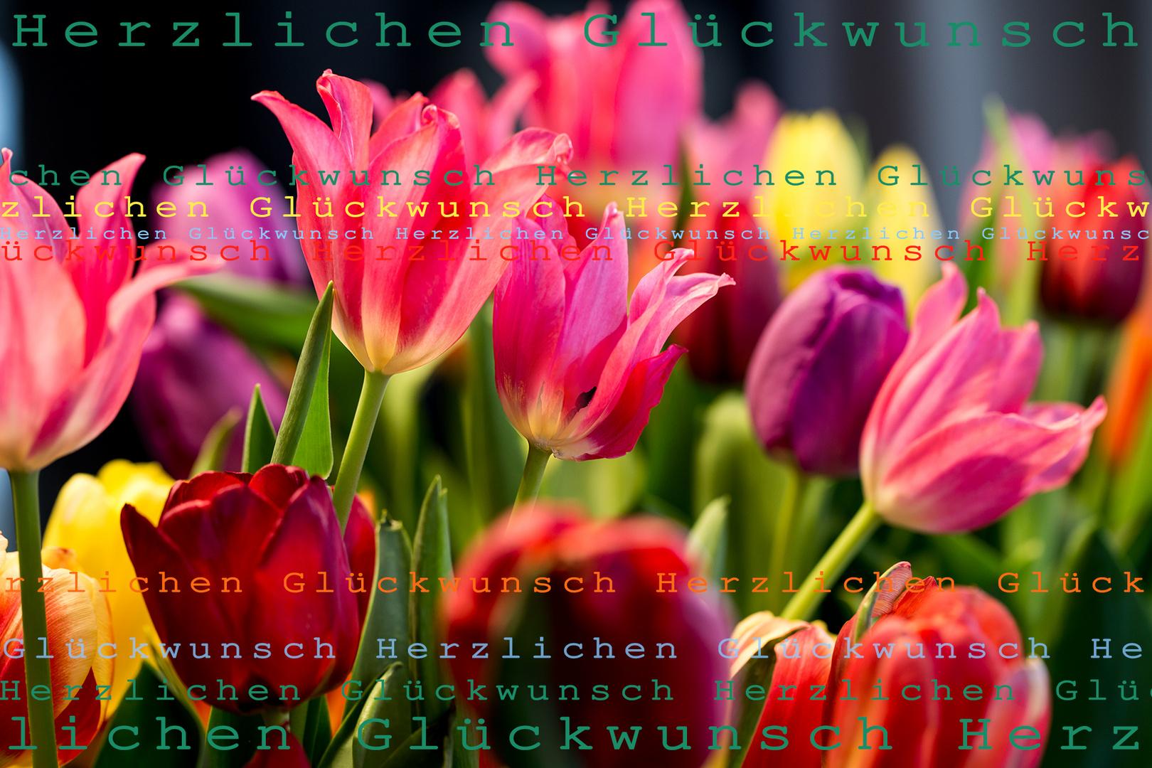 ... schon wieder bunte tulpen ...