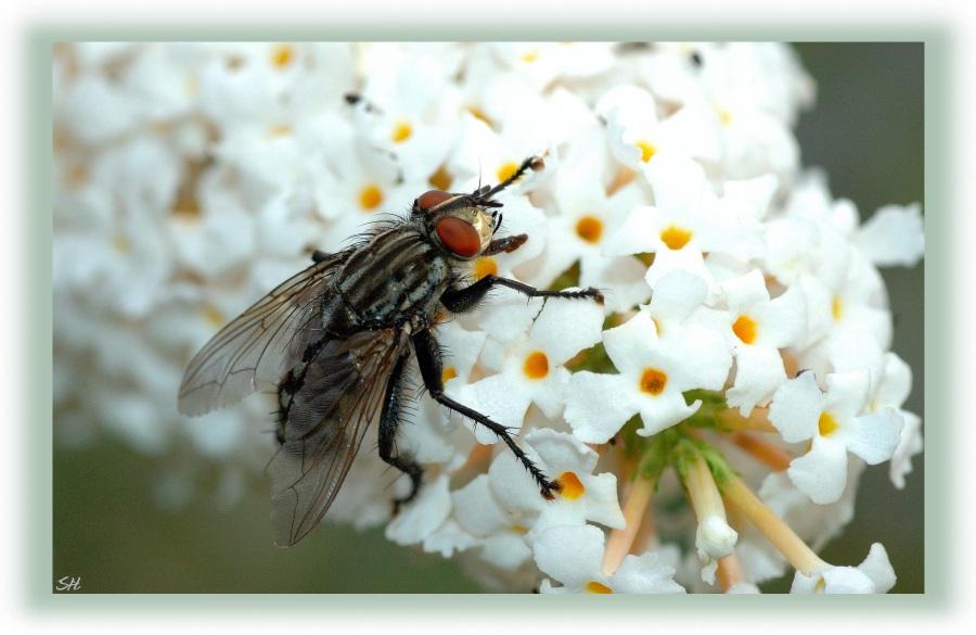 Schon wieder eine Fliege