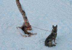 Schon wieder Warten im Schnee  .DSC_2989