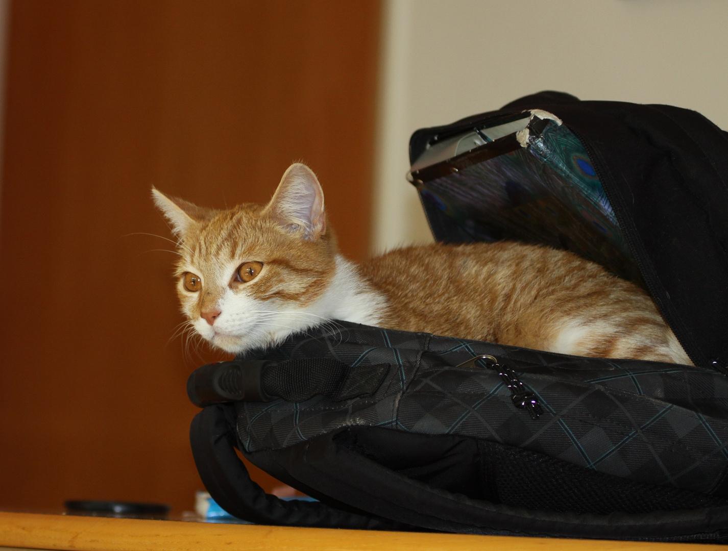Schoolbag - cat
