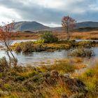 Schottischer Herbst