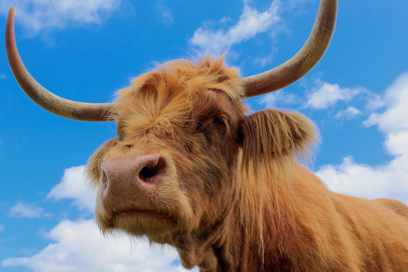 Schottland Tiere