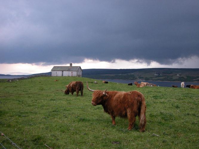 Schottland - 2004