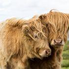 Schottland 2017 Geschwister