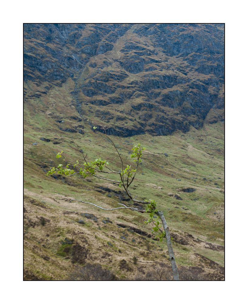 ... Schottland VII