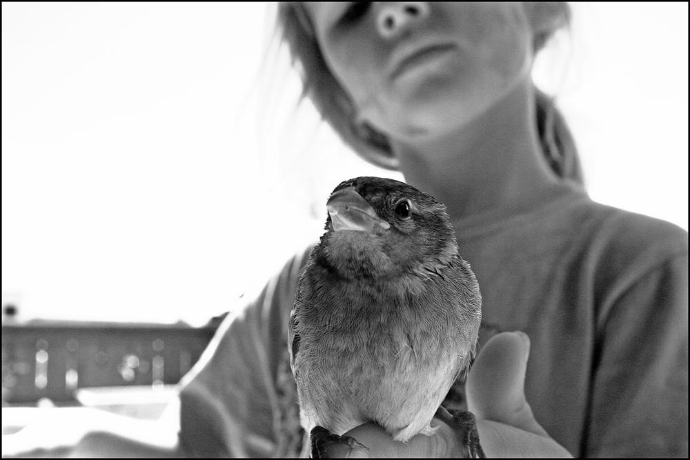 -- schräge vögel --