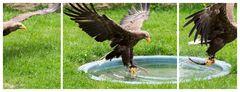schräge Vögel#03
