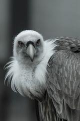 schräge Vögel#06
