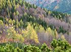 Schräger Herbstwald
