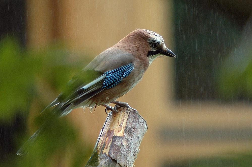 Sch....Regen