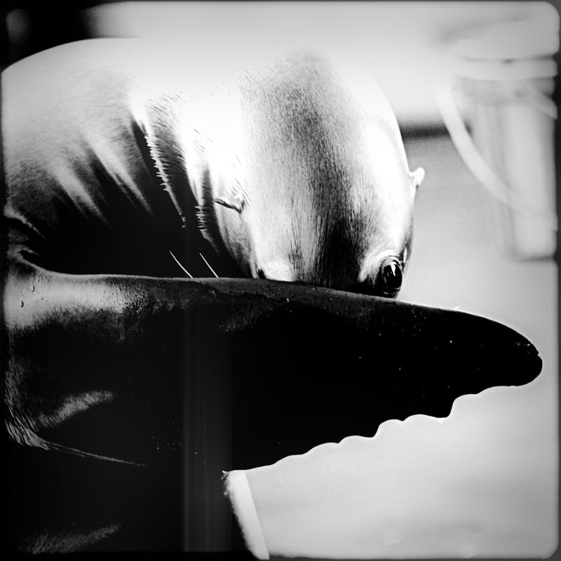 –– Schüchtern ––