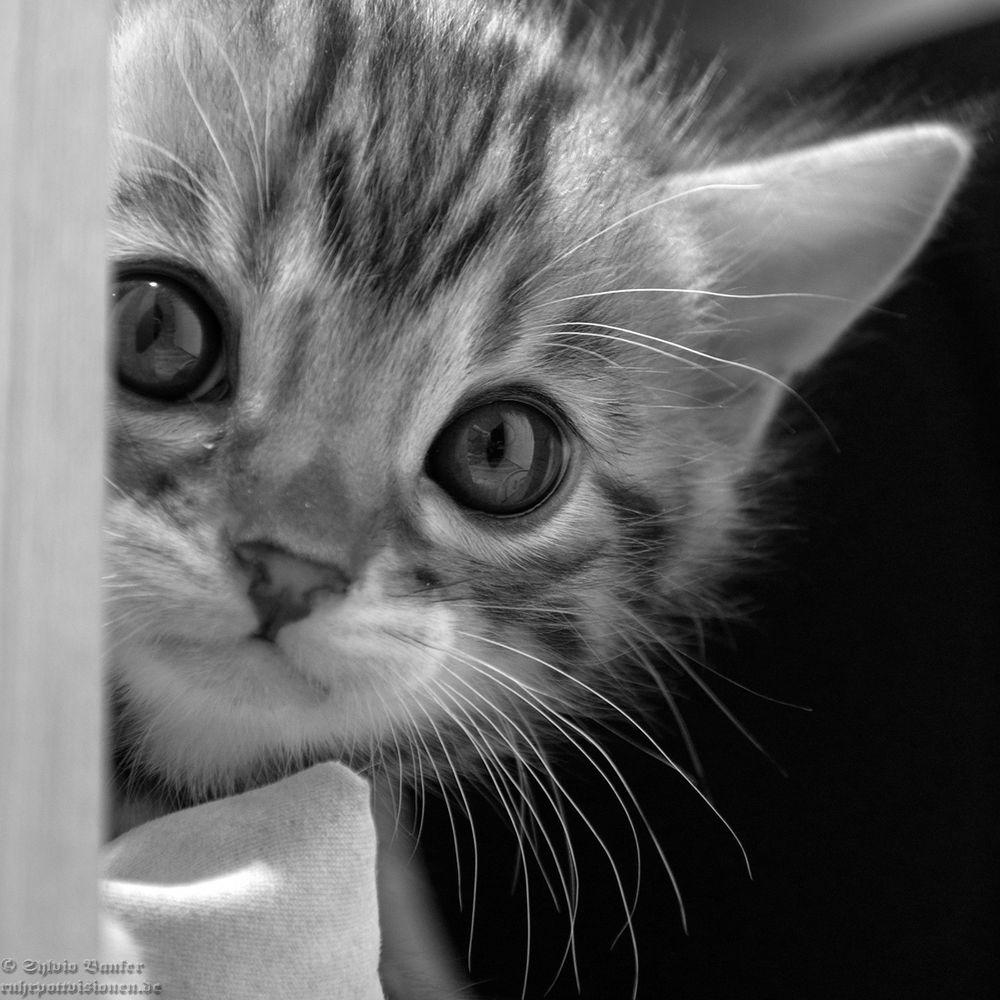schüchterne Neugier