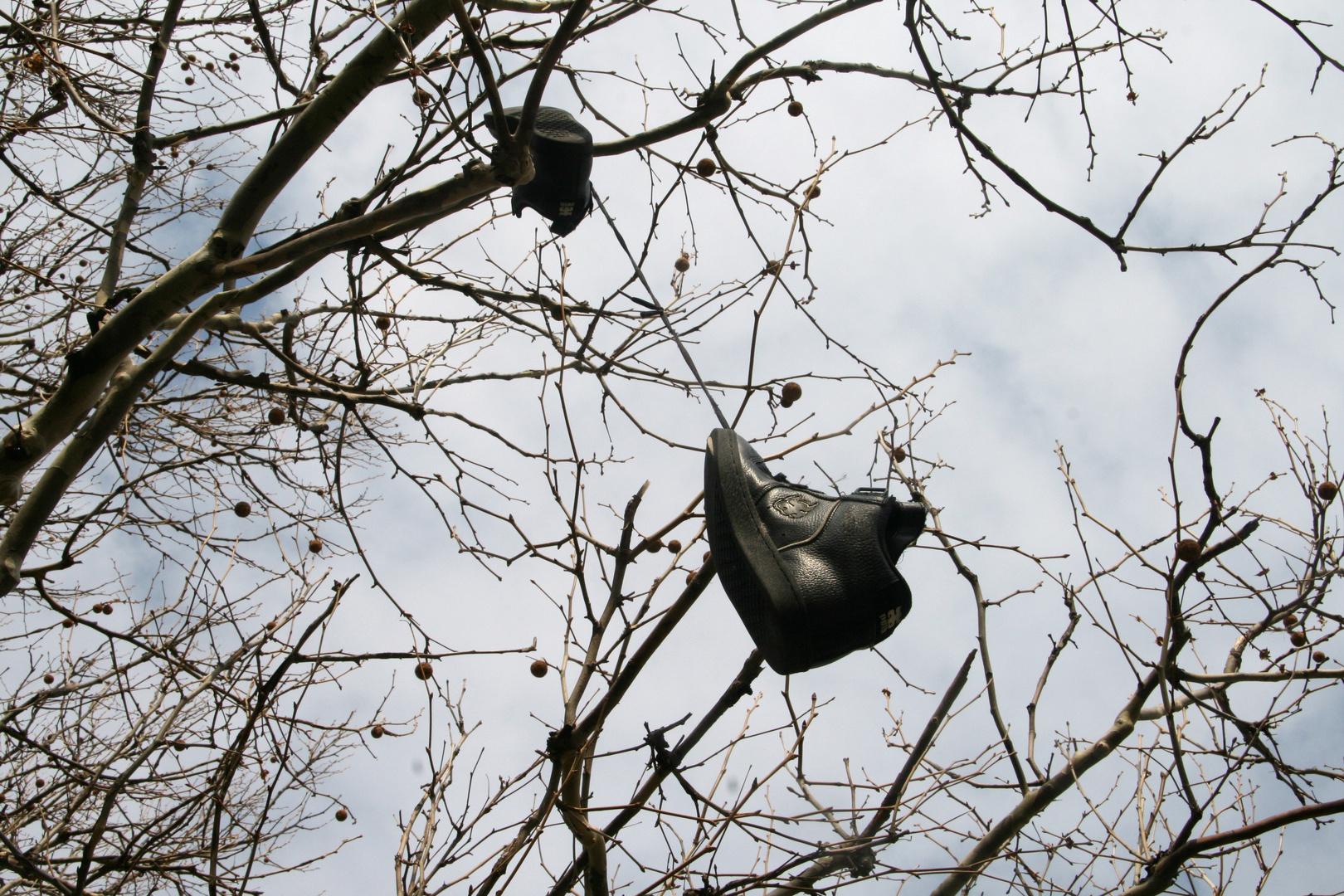 Schuhe wachsen auf Bäumen