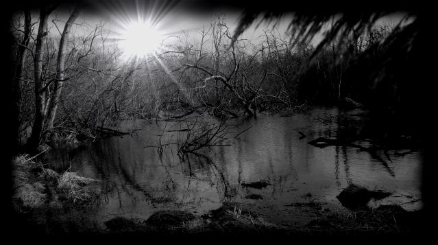 Schukier Moor