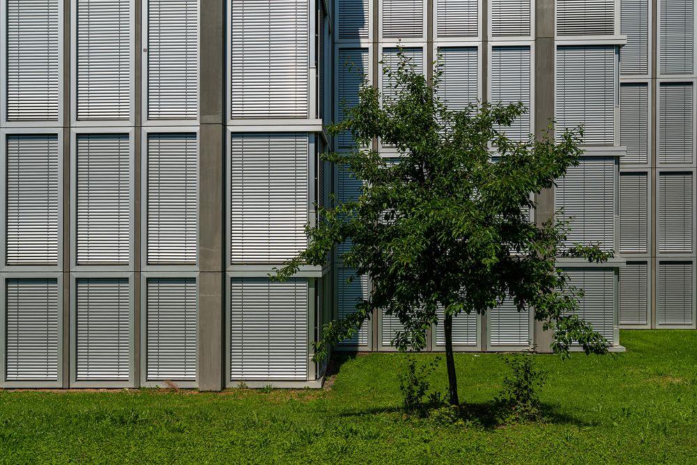 Schulhaus Obstgarten 2/2