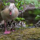 Schutz bei Mama.....