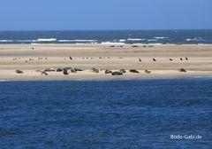 Schutzgebiet Sandbank