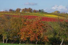 Schwäbische Weinberge + Obstbäume
