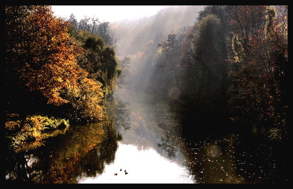 Schwäbischer Regenwald