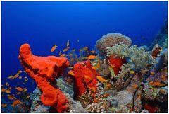 Schwämme, Korallen und anderes