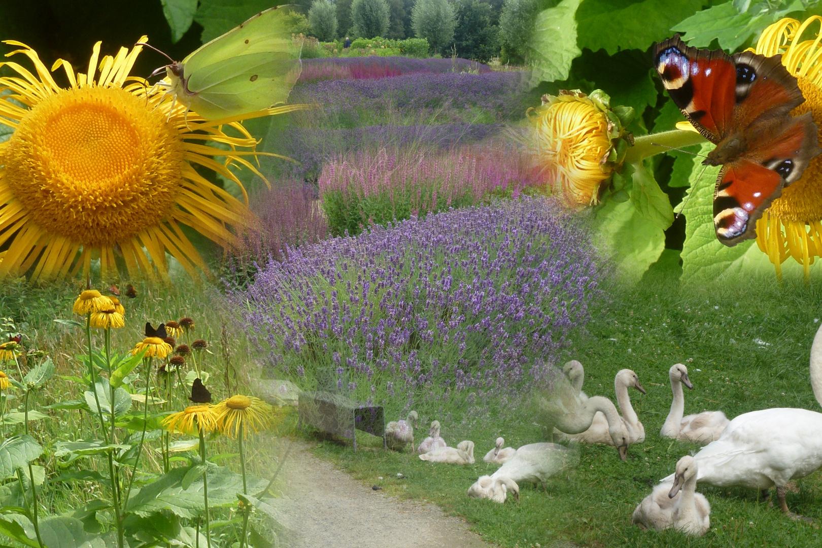Schwäne Blumen Schmetterlinge Foto Bild Pflanzen Blüten