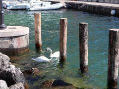 Schwäne im Gardasee