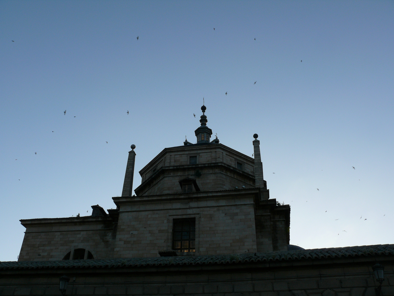 Schwalben über Toledo