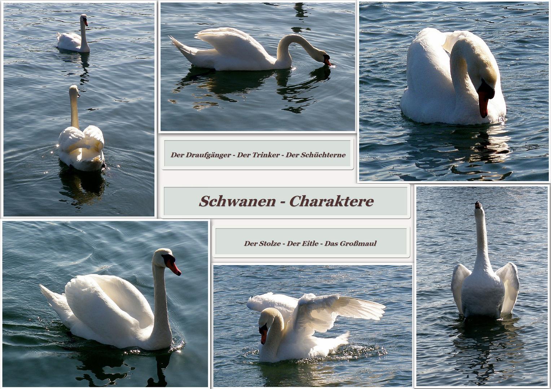 Schwanen-Charaktere