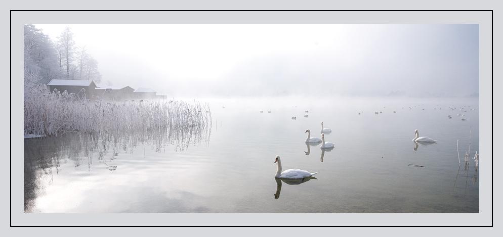 Schwanen-See