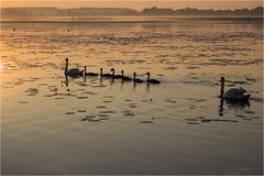 Schwanenfamilie beim Sonnenaufgangsausflug