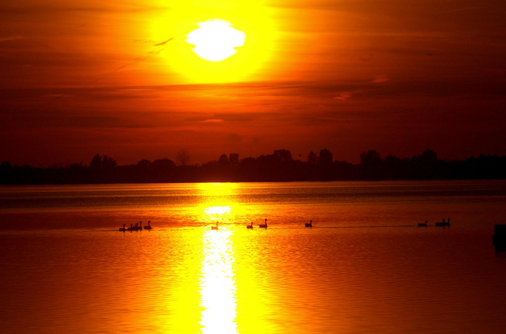 Schwanfamilie im Sonnenuntergang