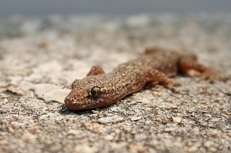 Schwanz los!!Was für ein Pech:-)) Foto & Bild | tiere, wildlife, amphibien & reptilien Bilder