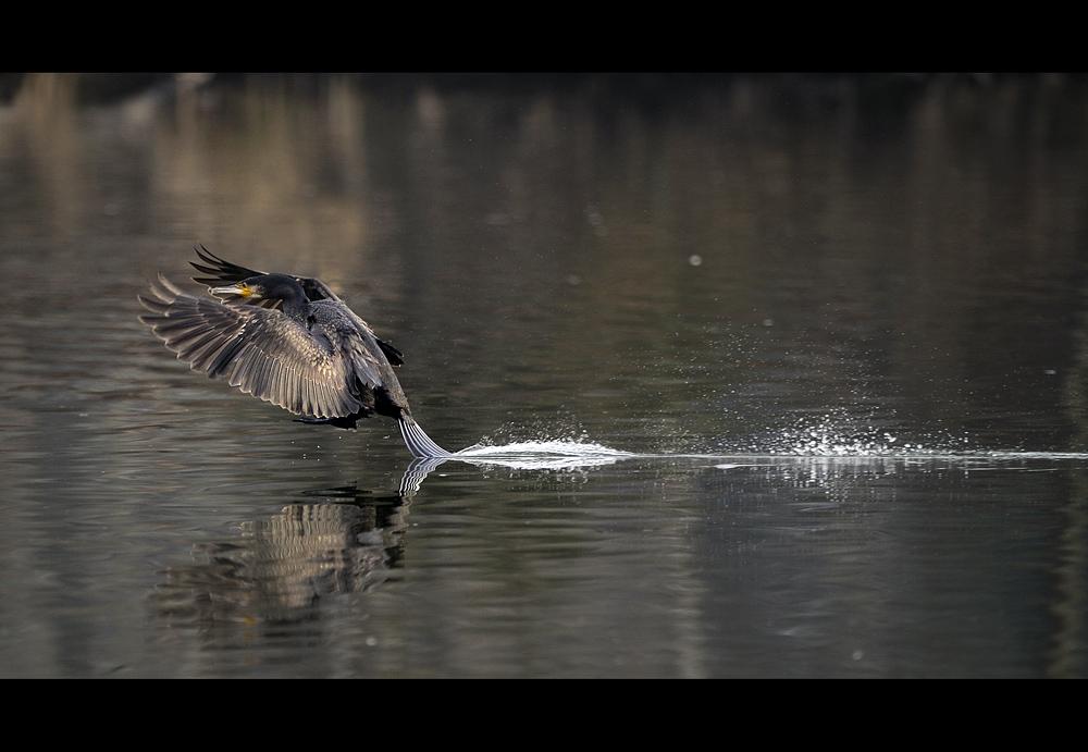 Schwanzfedern-Wasserbremse
