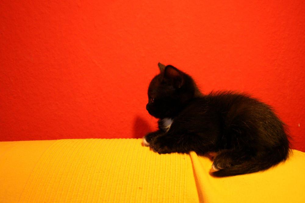 schwarz-rot-gold I