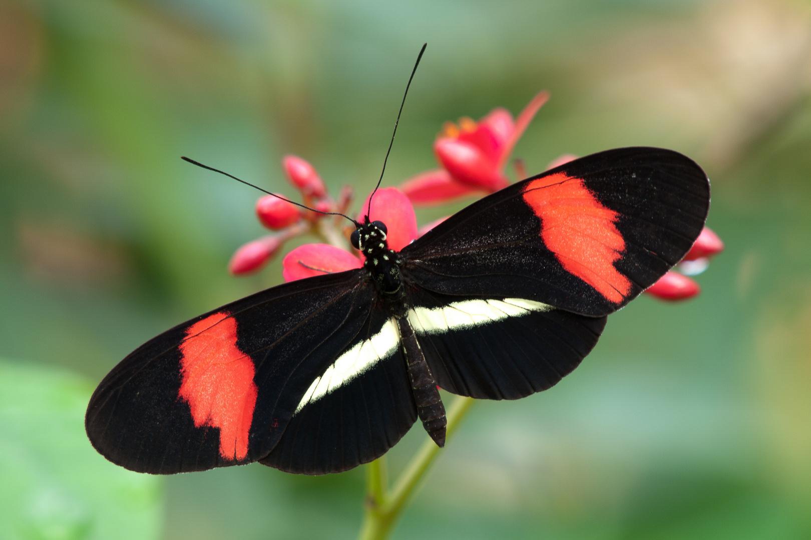 Schwarz-Rot-Weiß