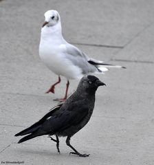 Schwarz und Weiss ist nicht unbedingt schwarz-weiss