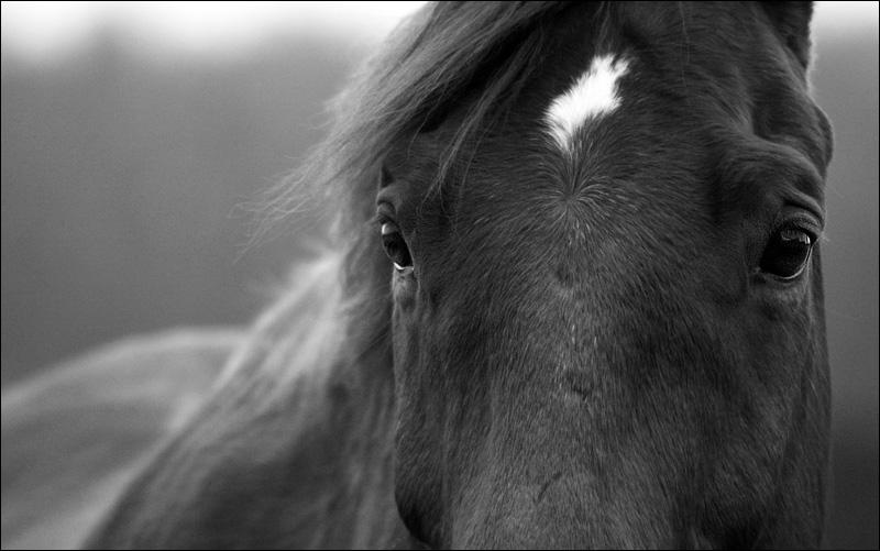 schwarz wei foto bild tiere haustiere pferde esel maultiere bilder auf fotocommunity. Black Bedroom Furniture Sets. Home Design Ideas