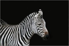 schwarz / weiß