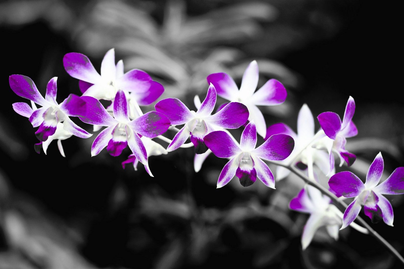 schwarz weiss farbe 5 foto bild pflanzen pilze flechten bl ten kleinpflanzen. Black Bedroom Furniture Sets. Home Design Ideas