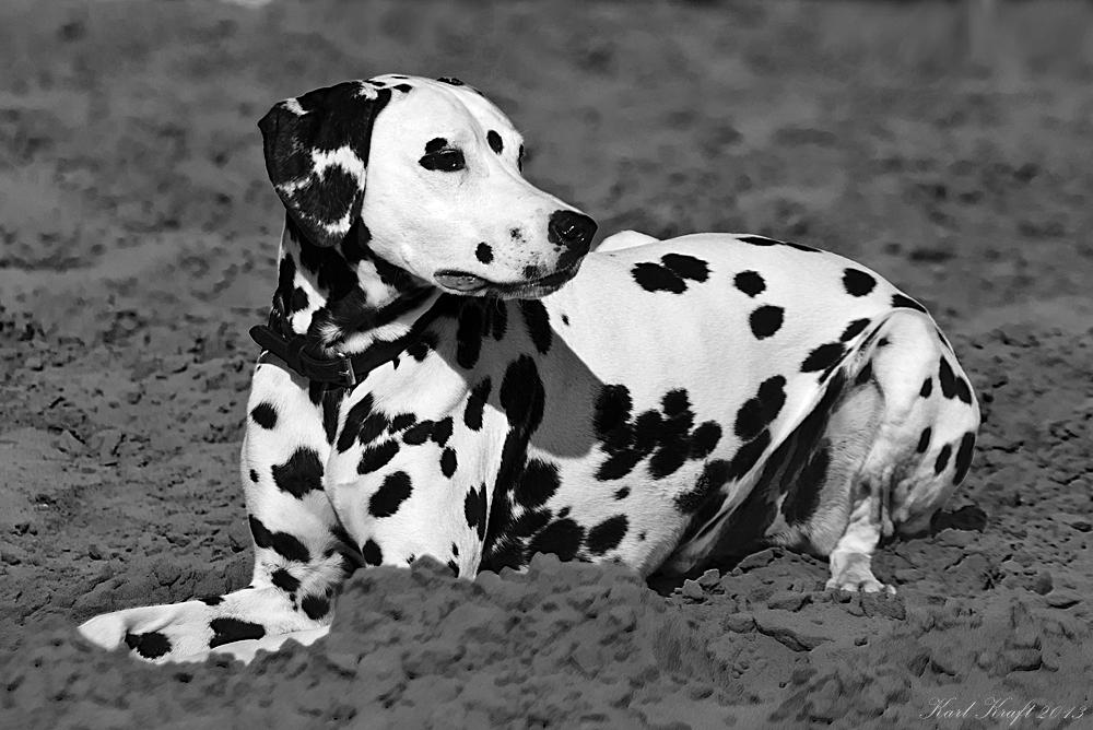 schwarz-weiß in schwarz-weiß