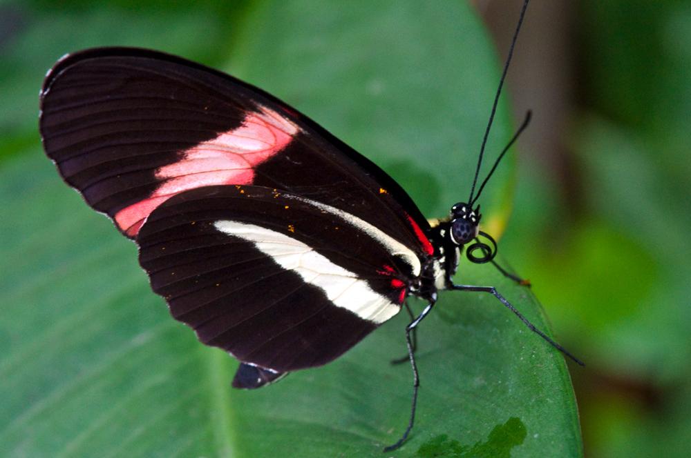 schwarz weiss rot foto bild tiere zoo wildpark falknerei insekten spinnen bilder auf. Black Bedroom Furniture Sets. Home Design Ideas
