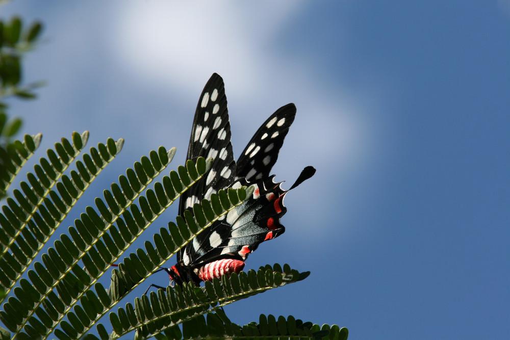 schwarz weiss rot foto bild tiere wildlife schmetterlinge bilder auf fotocommunity. Black Bedroom Furniture Sets. Home Design Ideas
