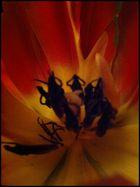 schwarze Blütenbewohner gesichtet :-))